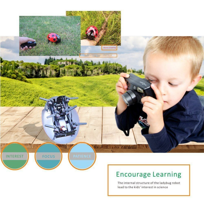 DIY RC Ladybug Robot 2.4GHz Rechargeable Toys